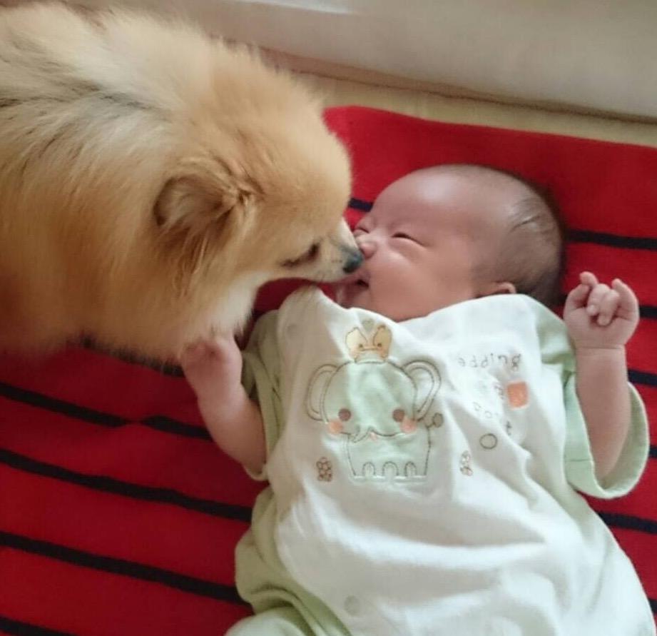 犬とイチャイチャ